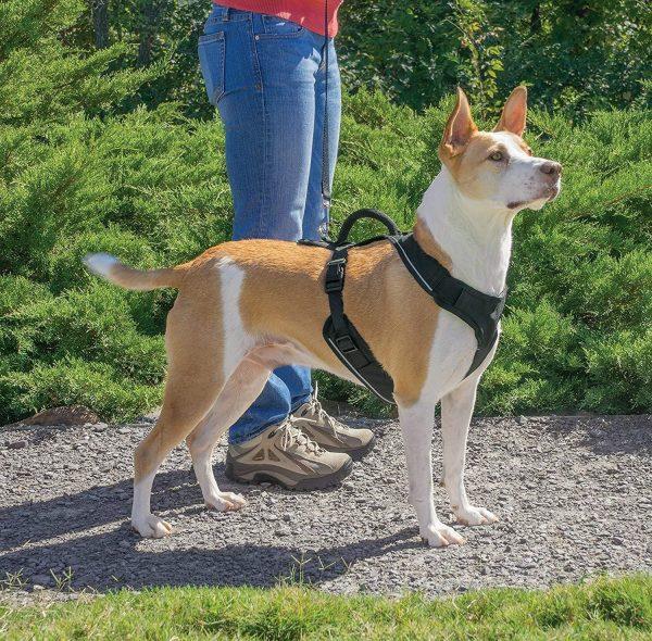 Petsafe EasySport, l'un des meilleurs harnais pour chien