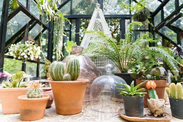 Critères de choix d'un jardin d'intérieur